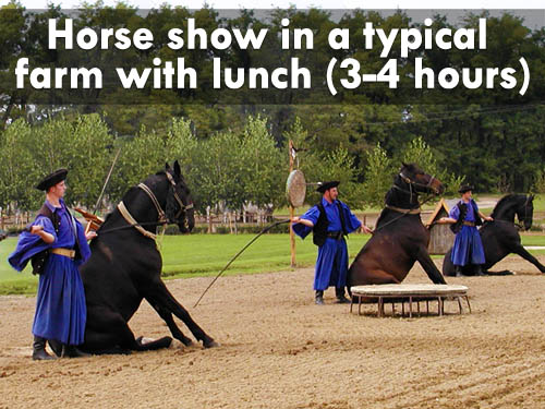 Horse show in a typical farm with lunch